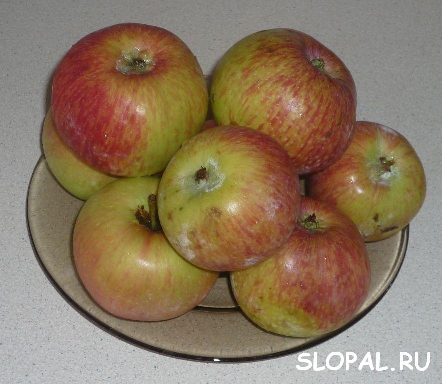 Кисло-сладкие яблоки для яблочного пирога